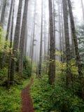 Stillahavs- skog northwest royaltyfri bild