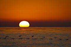 Stillahavs- solnedgång Arkivfoton
