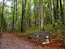Stille bank langs bosvoetpad Stock Afbeeldingen
