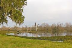 Stille Bayou in de Avond Royalty-vrije Stock Foto's