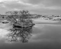 Stille bezinningen in het koude water Royalty-vrije Stock Afbeeldingen