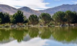 Stille ochtend op het meer stock fotografie