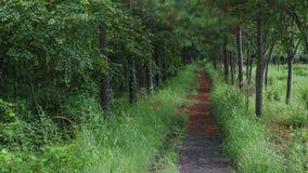 Stille weg door het bos stock afbeeldingen