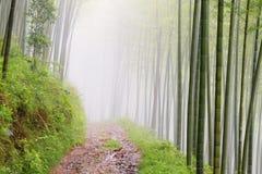 Stille wegweg in het bamboebos Stock Afbeeldingen