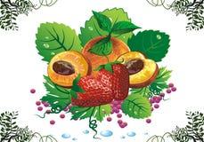 Stilleben - aprikors och jordgubbar på gröna sidor Royaltyfri Fotografi