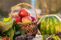 Stilleben av äpplen i en korg, en vattenmelon och en grapes_ arkivbild