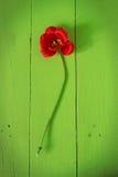 Stilleben av frukt på en grön bakgrund royaltyfria bilder