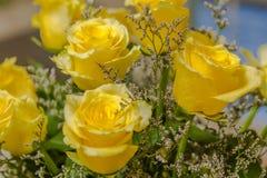 Stilleben av gula rosor Fotografering för Bildbyråer