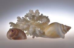Stilleben av skal och korall royaltyfri fotografi
