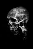 Stilleben av skallen Royaltyfria Bilder