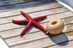 Stilleben av stjärnafisken och echinusskelettet woden på bakgrund Royaltyfria Foton