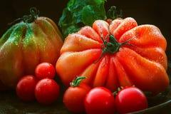 Stilleben av våta röda tomater med en svart bakgrund Arkivfoton