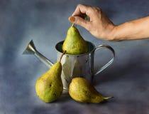 Stilleben av vattenpäron på en mörk bakgrund royaltyfria foton