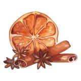 Stilleben för frukt för citrus anis för vattenfärgcitronen isolerade kanelbrun vektorn stock illustrationer