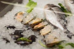 Stilleben för hög vinkel av variation av den rå nya fisken som kyler på B Royaltyfri Foto