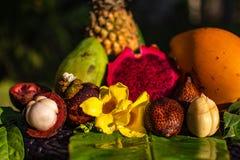 Stilleben för nya frukter för exotiska tingasiat - ananas, mango, drake, ormfruite och mangustin arkivbild