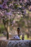 Stilleben i natur på filialerna av ett härligt träd Royaltyfri Bild