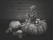 Stilleben med den mänsklig skallen och pumpa Royaltyfri Foto