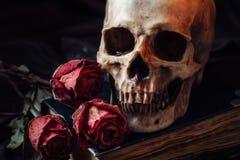 Stilleben med den mänskliga skallen Royaltyfri Foto