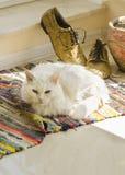 Stilleben med den vita katten, manskor, blomkrukan och den vävde filten Arkivfoton