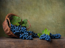 Stilleben med druvor i en korg royaltyfri foto