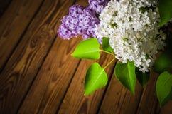 Stilleben med en bukett av lilor Arkivfoton