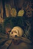 Stilleben med en mänsklig skalle med ökenväxter Royaltyfri Fotografi