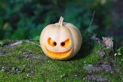 Stilleben med halloween pumpa Royaltyfri Fotografi