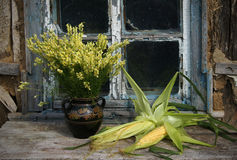 Stilleben med havre och lösa blommor Arkivfoton