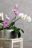 Stilleben med orkidér Arkivbild
