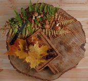 Stilleben med sågade champinjoner och höstsidor på ett trä royaltyfri fotografi