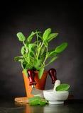 Stilleben med Sage Plant och redskap Arkivfoto