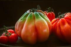 Stilleben med stora bullÂ's-höra-tomater på svart bakgrund Royaltyfria Foton