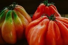 Stilleben med stora röda tomater med droppe av vatten Royaltyfri Bild
