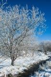 Stilleben - vinter Arkivbilder