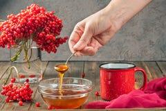 Stillebenbär av en viburnum i ett exponeringsglas och rånar av varm te och honung royaltyfria bilder