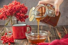 Stillebenbär av en viburnum i ett exponeringsglas och rånar av varmt te a arkivbilder