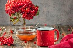 Stillebenbär av en viburnum i ett exponeringsglas och rånar av varmt te a arkivfoton