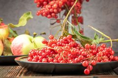 Stillebenbär av en viburnum och trädgårds- säsongsbetonade äpplen i p royaltyfria bilder