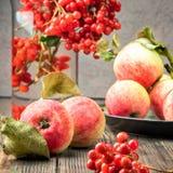 Stillebenbär av en viburnum och trädgårds- säsongsbetonade äpplen i p royaltyfri fotografi