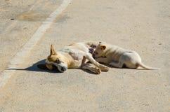 Stillend Hunde Stockfoto