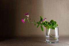 Stilleven 1 Bloeiende bloem Royalty-vrije Stock Foto's