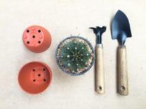 Stilleven Cactus en het Tuinieren hulpmiddelen op Uitstekende Bruine Kleurenbac Royalty-vrije Stock Fotografie