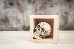 Stilleven 1 De schedel in houten doos Royalty-vrije Stock Afbeeldingen