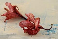 Stilleven met bloem Royalty-vrije Stock Afbeelding