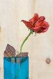 Stilleven met bloem Royalty-vrije Stock Foto