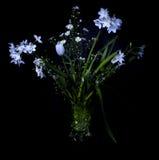Stilleven met bloemen Stock Afbeelding