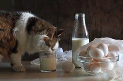 Stilleven met een een het leven dame-kat en melk Stock Fotografie