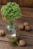 Stilleven met groene bloemen in een fles en noten Stock Fotografie