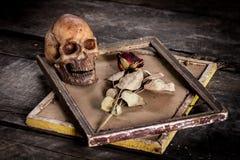 Stilleven met menselijke schedel en rozen droog in een omlijsting Royalty-vrije Stock Afbeeldingen
